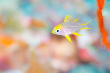 幼魚が可愛い!